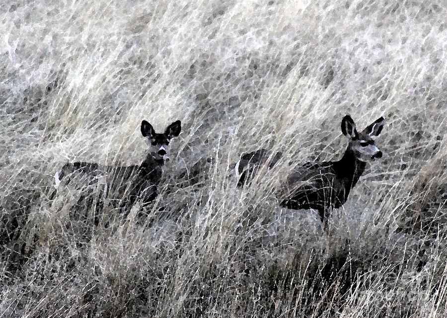 Deer Photograph - Protected Babies 1 by Brenda Henley