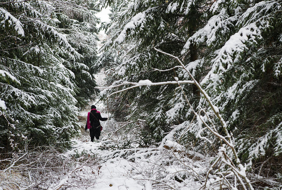 Forest Photograph - Protective Forest In Winter With Snow Covered Conifer Trees by Matthias Hauser