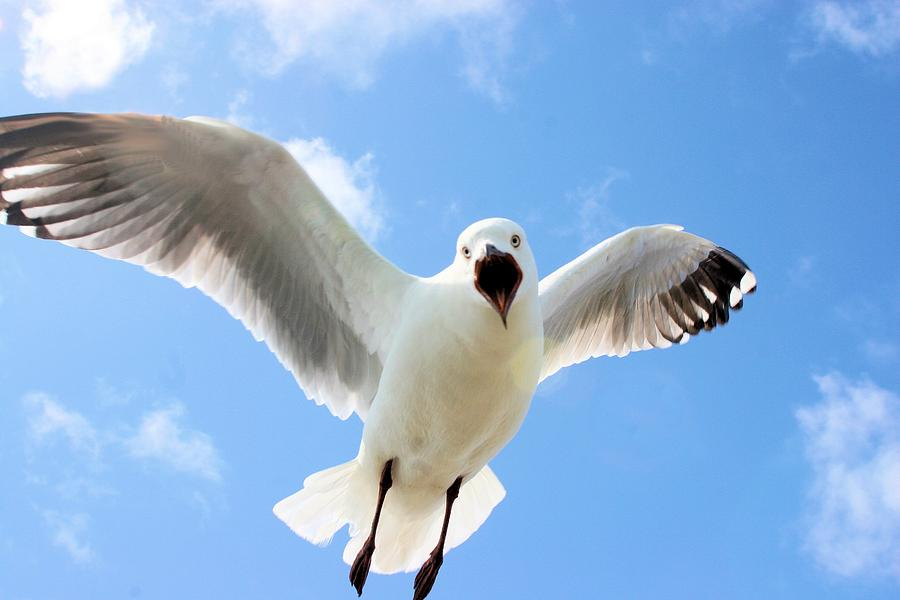 Protective Gull by David Rich
