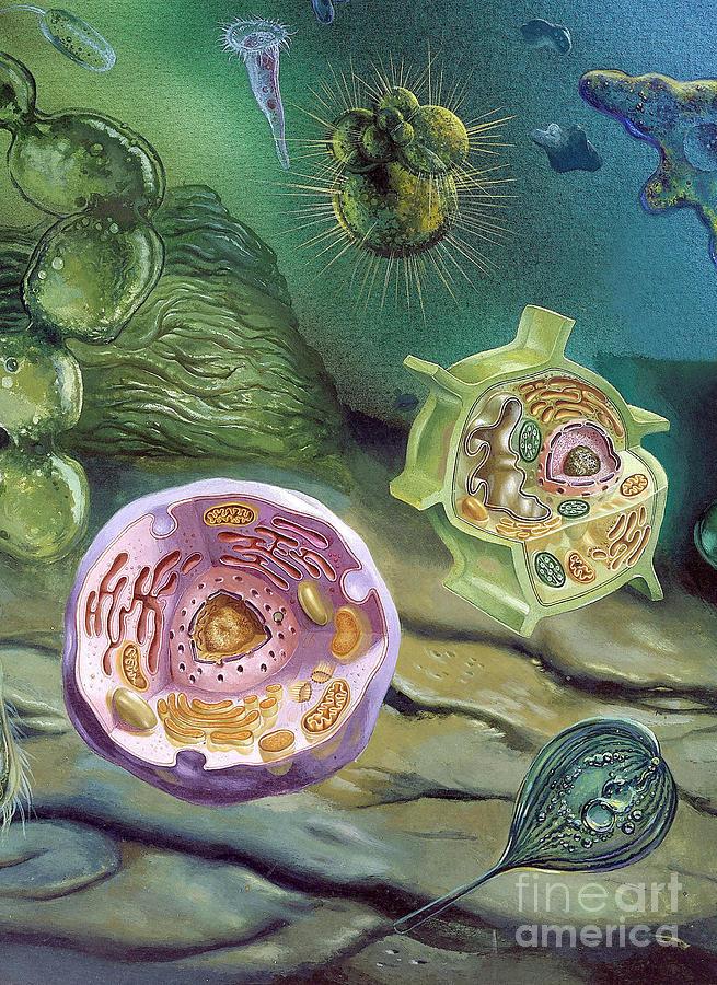 Proterozoic Era Photograph By Publiphoto