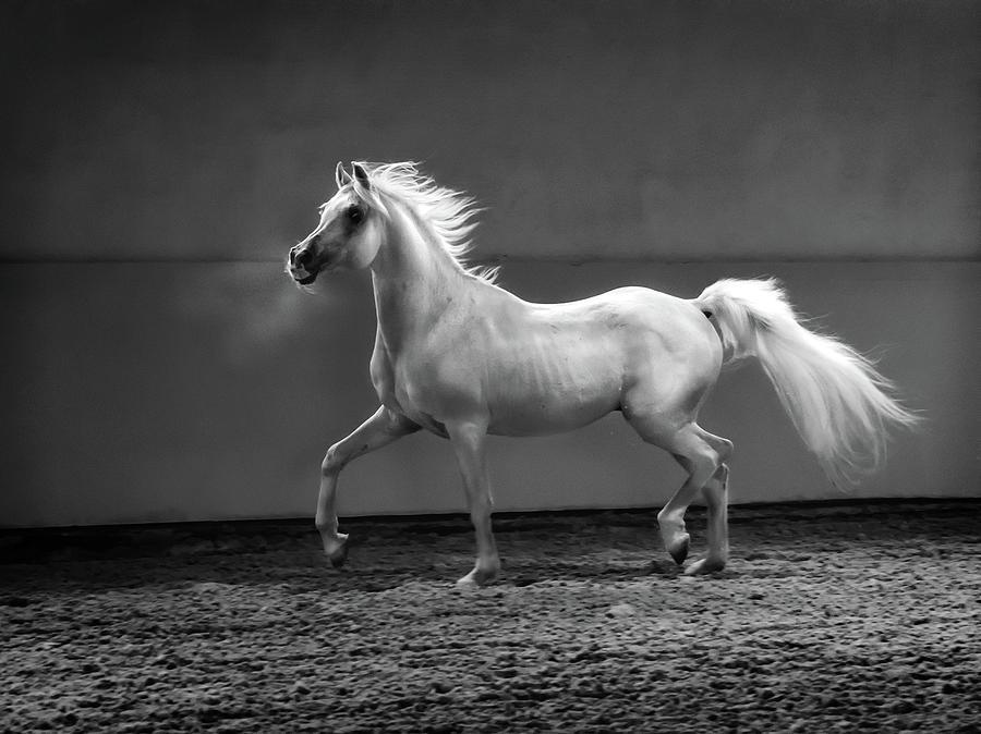 Proud Arabian Horse - Stallion In Photograph by Kerrick