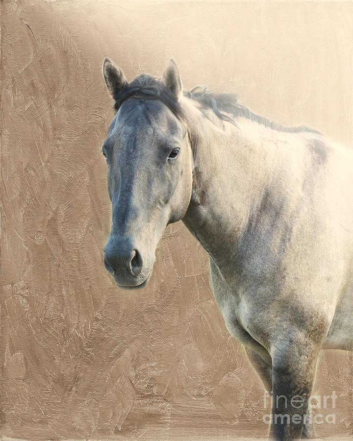 Horse Photograph - Proud by Betty LaRue