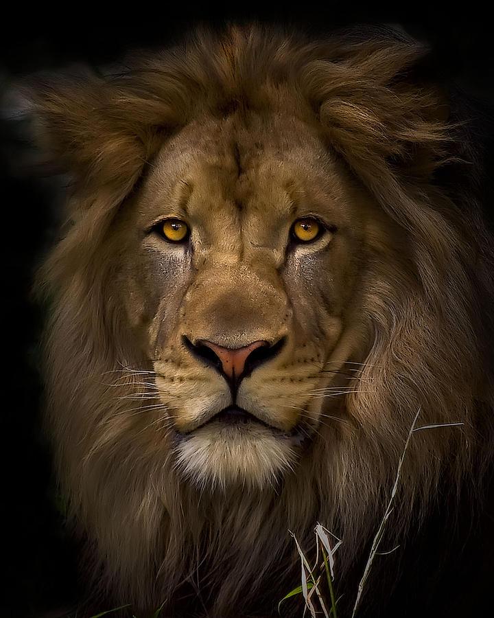 Animal Photograph - Proud by Cheri McEachin