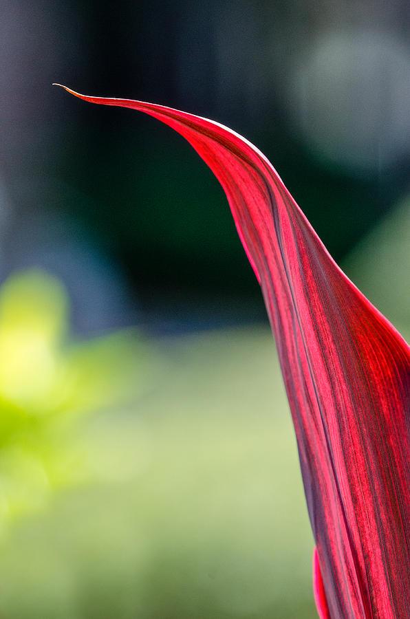 Plant Photograph - Proud Petal by Bill LITTELL