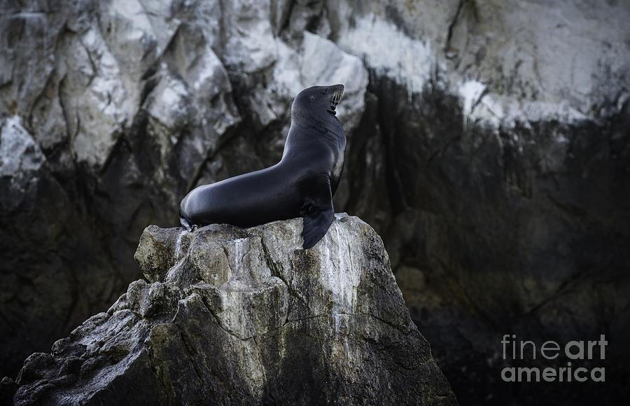 Cabo San Lucas Photograph - Proud by Richard Mason
