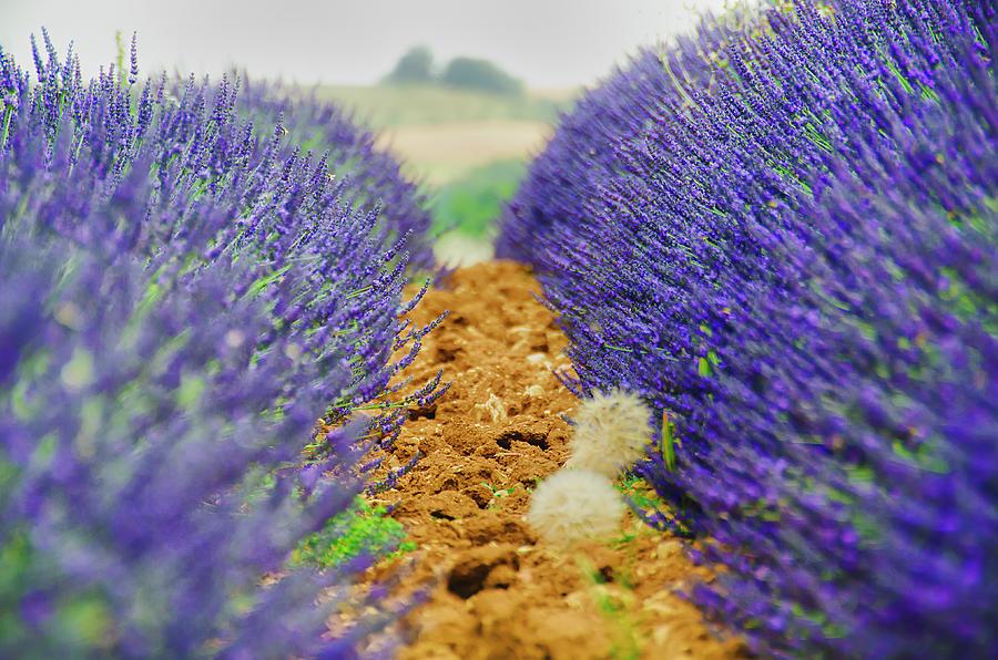 Provence Photograph by Alessandro Giorgi Art Photography