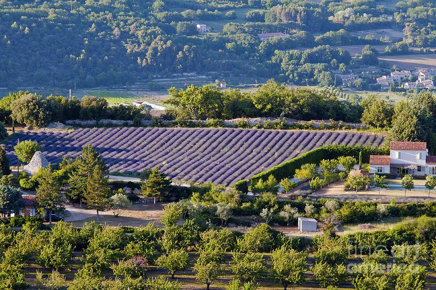 Provence Photograph - Provence Farmland by Bob Phillips