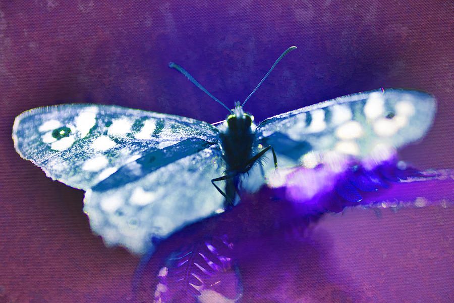 Psychedelic Butterfly by David Davies