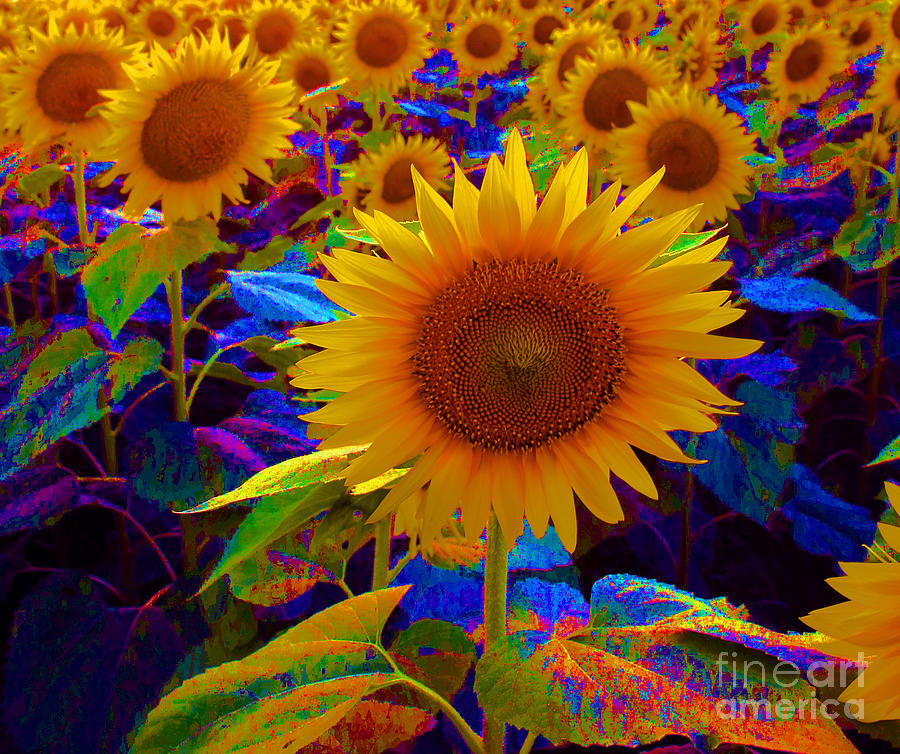 Psychedelic Sunflowers Photograph by Betty Morgan