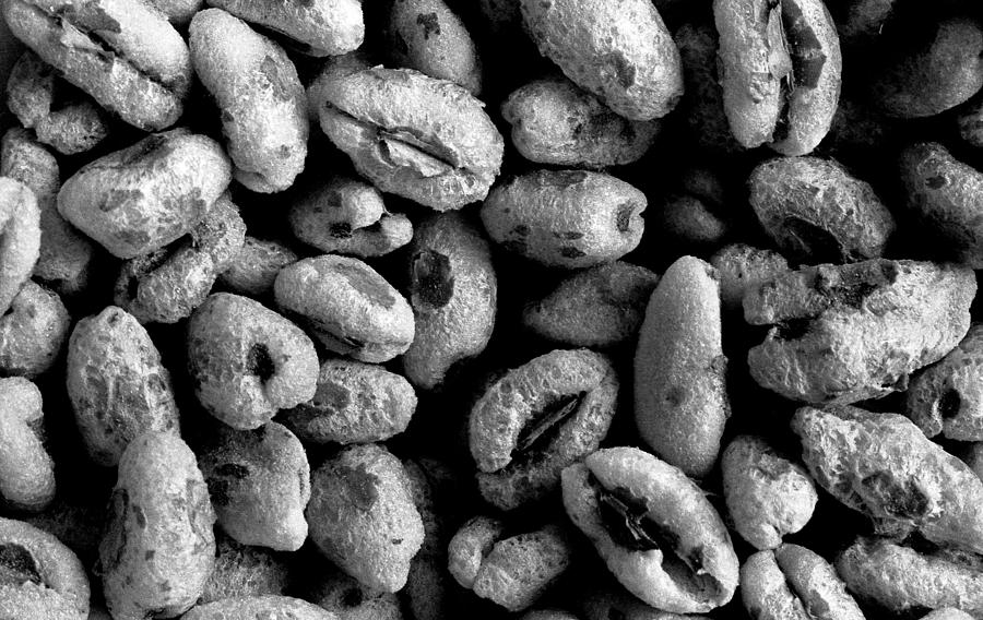 Puffed Wheat Cereal Photograph by Lonnie Paulson