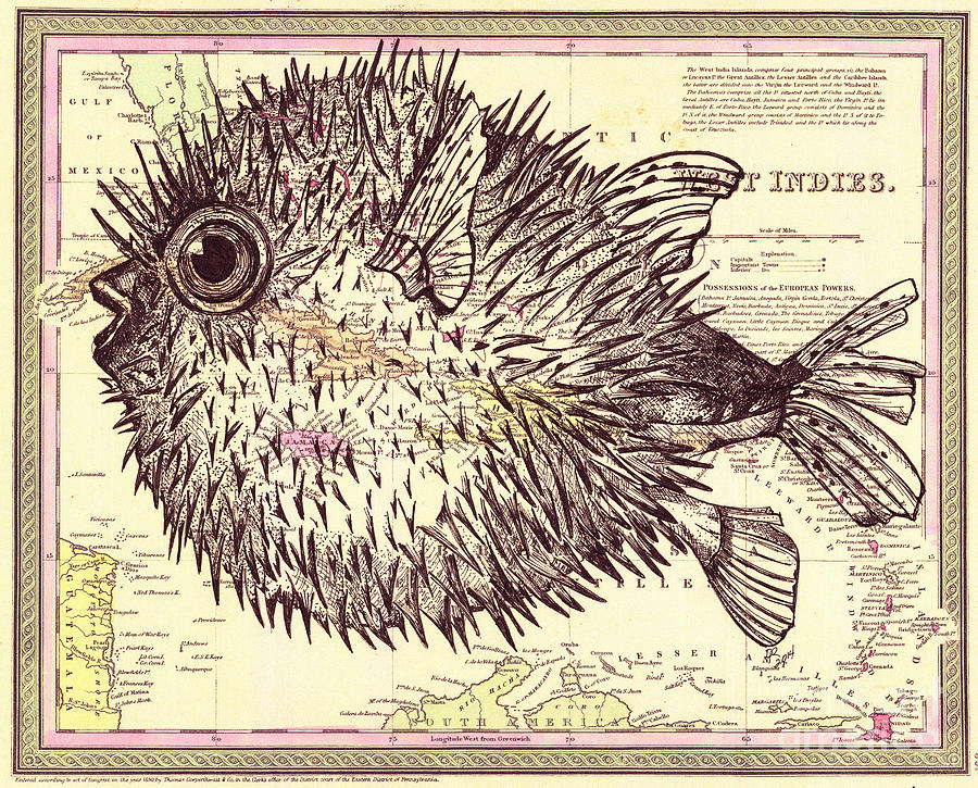 Puffer Fish Drawing