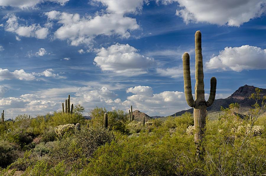 Arizona Photograph - Puffy White Clouds  by Saija  Lehtonen