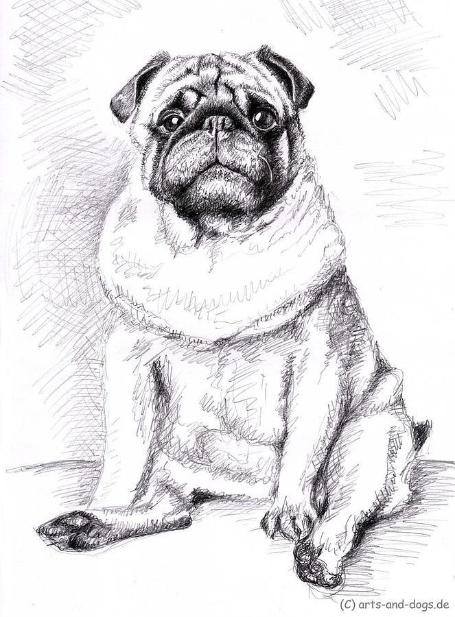 Dog Drawing - Pug Anton by Nicole Zeug
