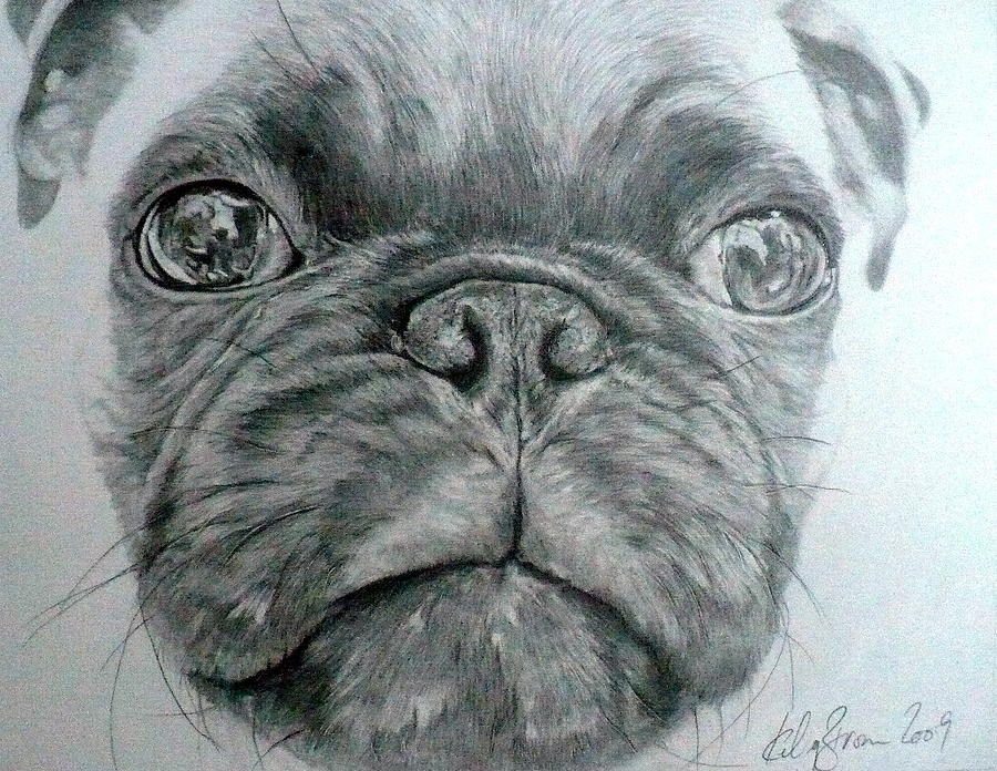 Pencil Drawings Drawing - Pug by Kelly Brown