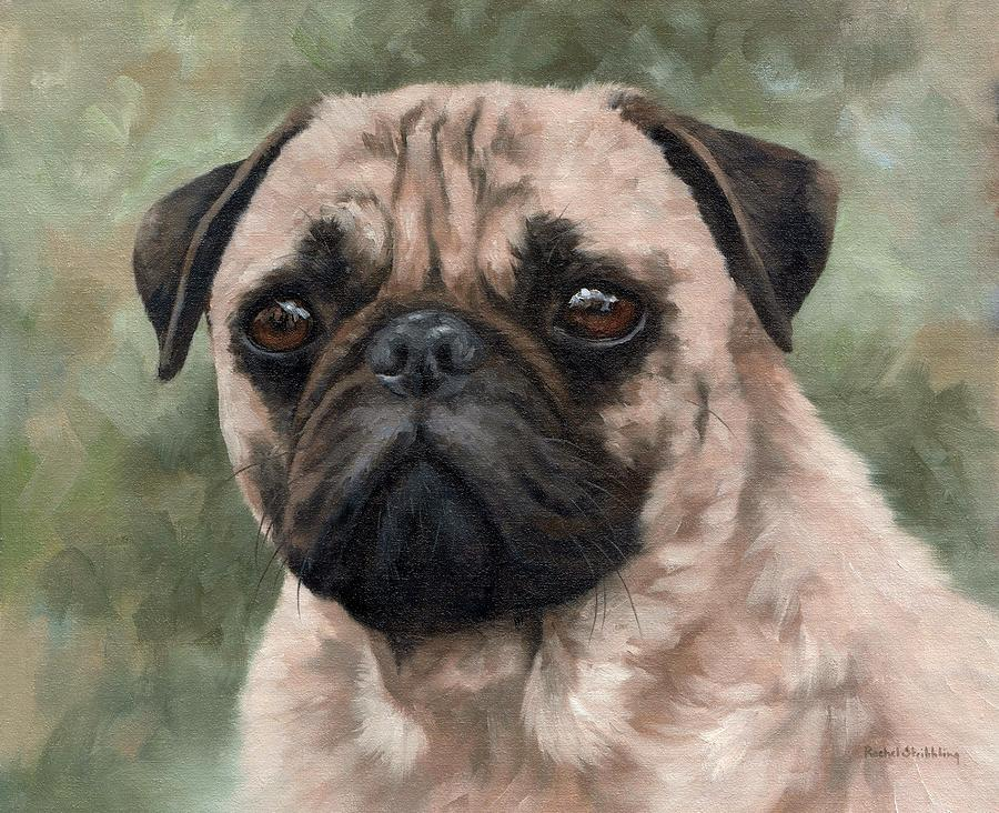 Pug Portrait Painting Painting By Rachel Stribbling
