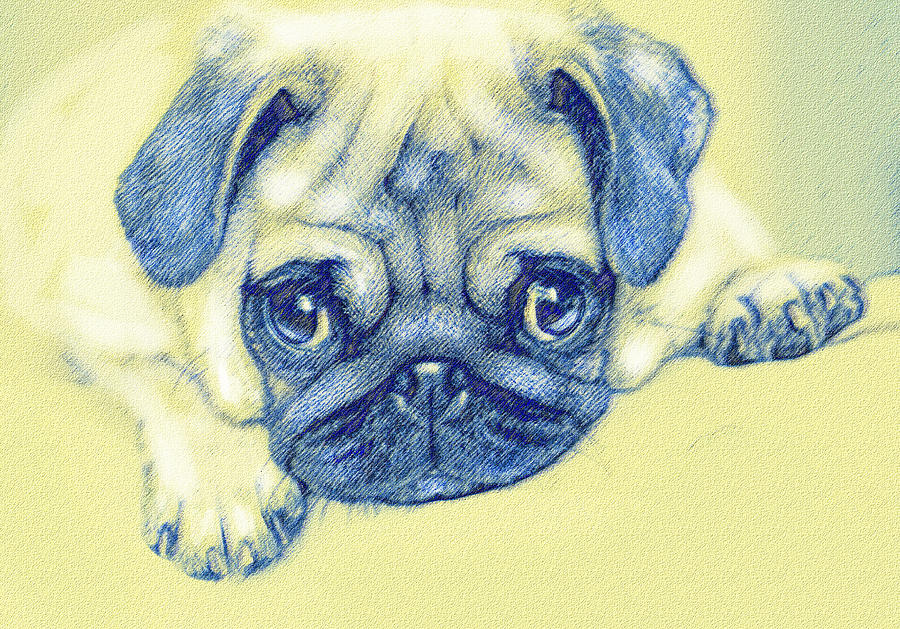 Pug Digital Art - Pug Puppy Pastel Sketch by Jane Schnetlage