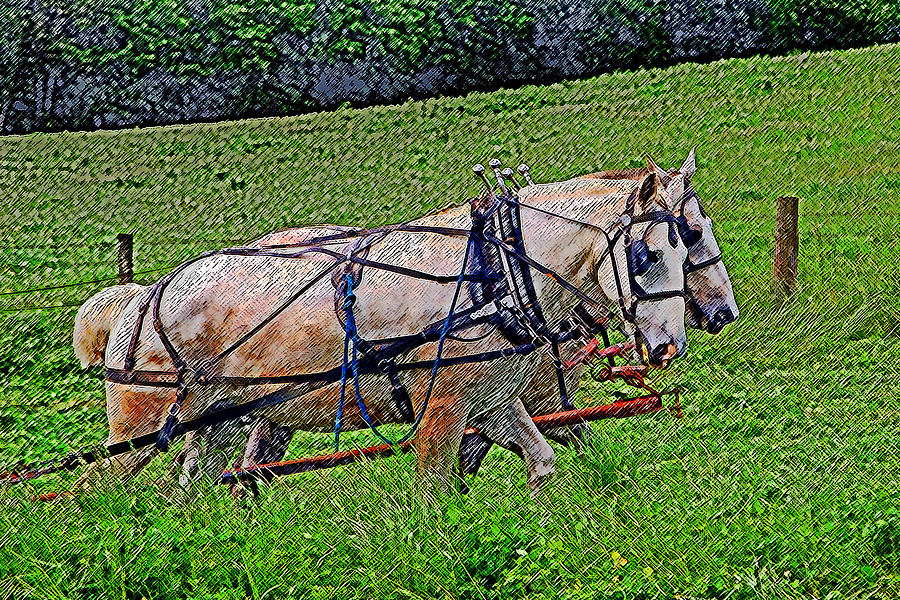 Horse Photograph - Pulling Their Weight by Brian Graybill