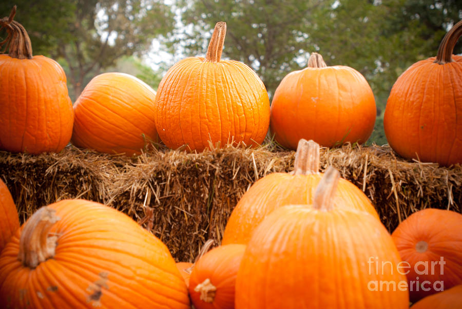 Pumpkins Photograph - Pumpkin Fest by Sonja Quintero