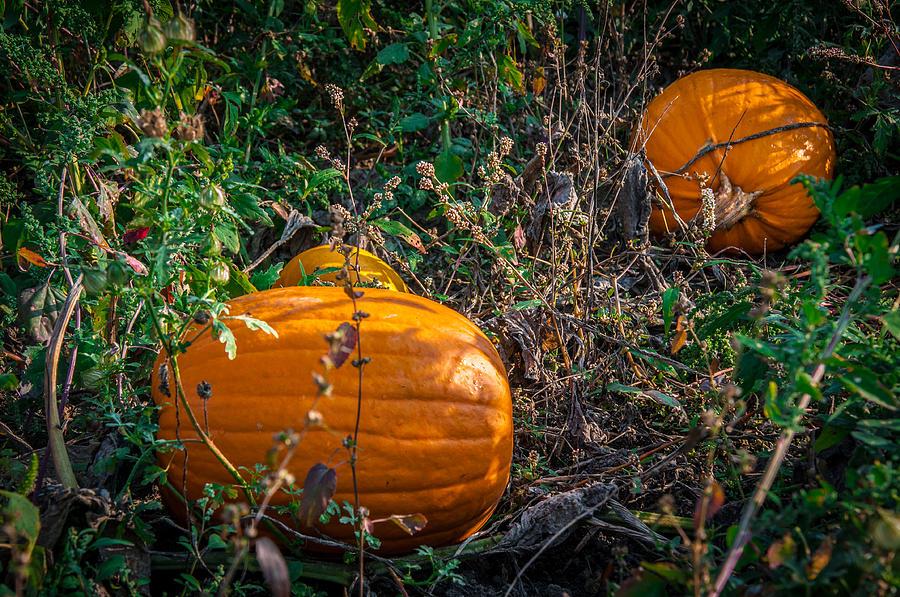 Pumpkin Photograph - Pumpkin Patch by Gene Sherrill