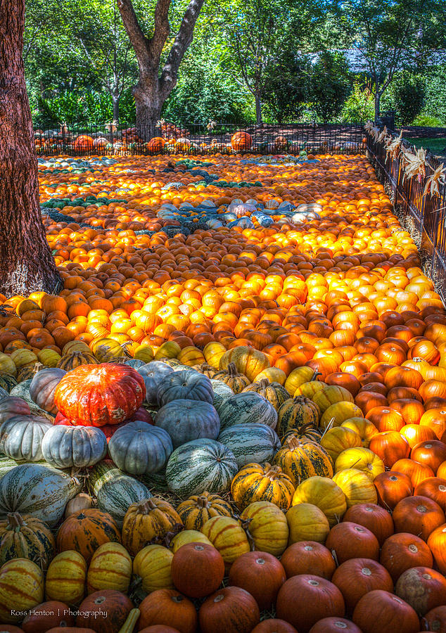 Hdr Photograph - Pumpkin Patch by Ross Henton