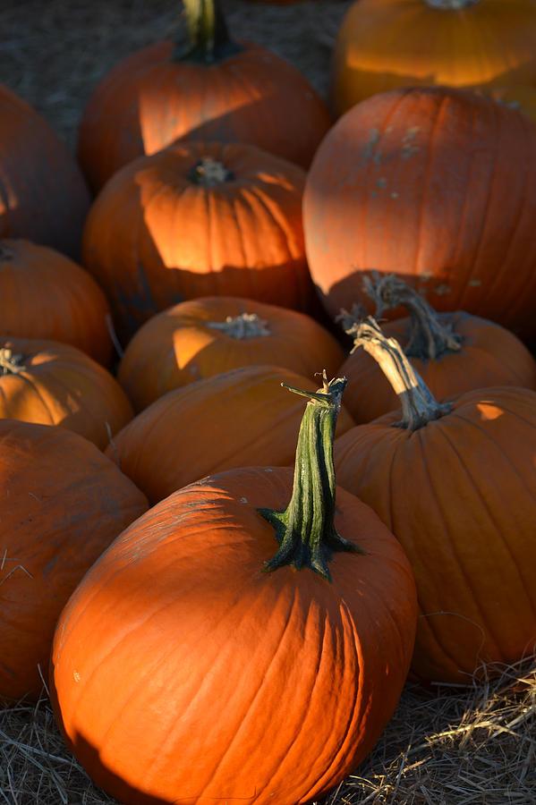Pumpkins Photograph - Pumpkin Patch by Toby McGuire