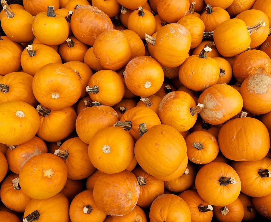 Pumpkin Pile Photograph