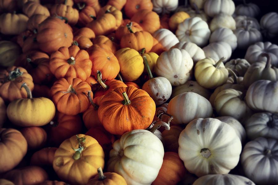 Pumpkins Photograph by Alicia Romano