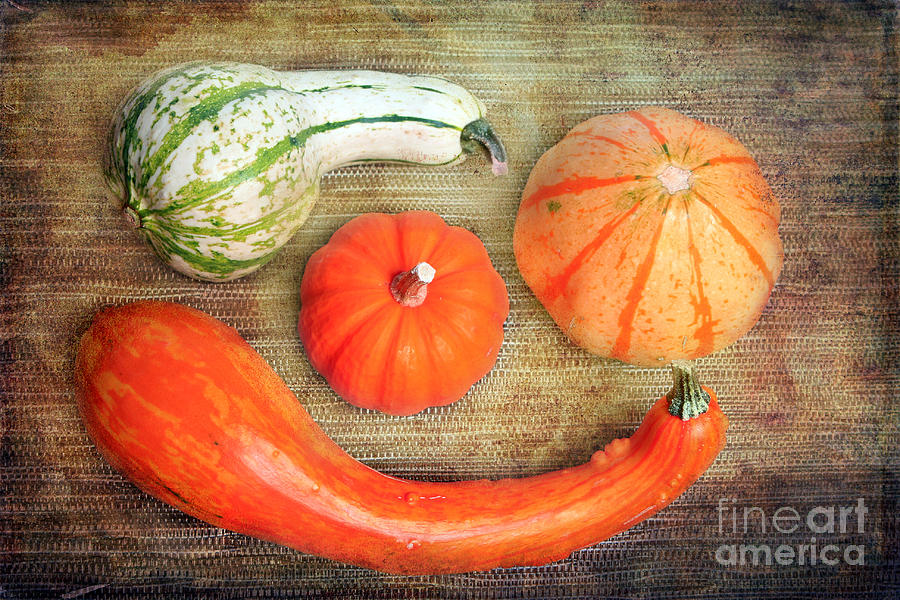 Autumn Photograph - Pumpkins by Angela Bruno