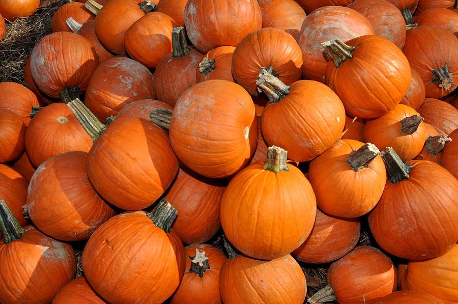 Pumpkin Photography Photograph - Pumpkins by Diane Lent