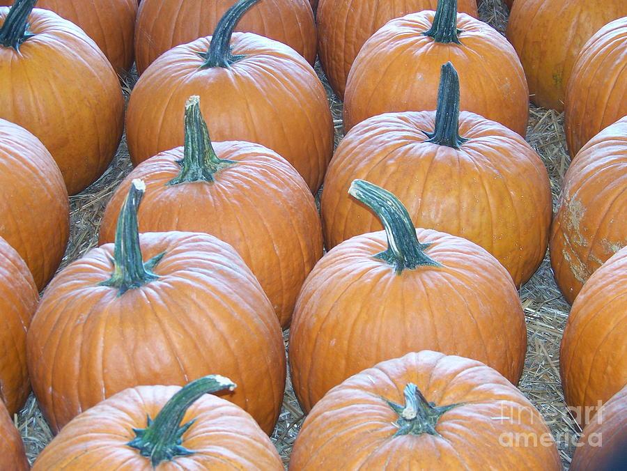 Pumpkins Photograph - Pumpkins Galore by Kevin Croitz