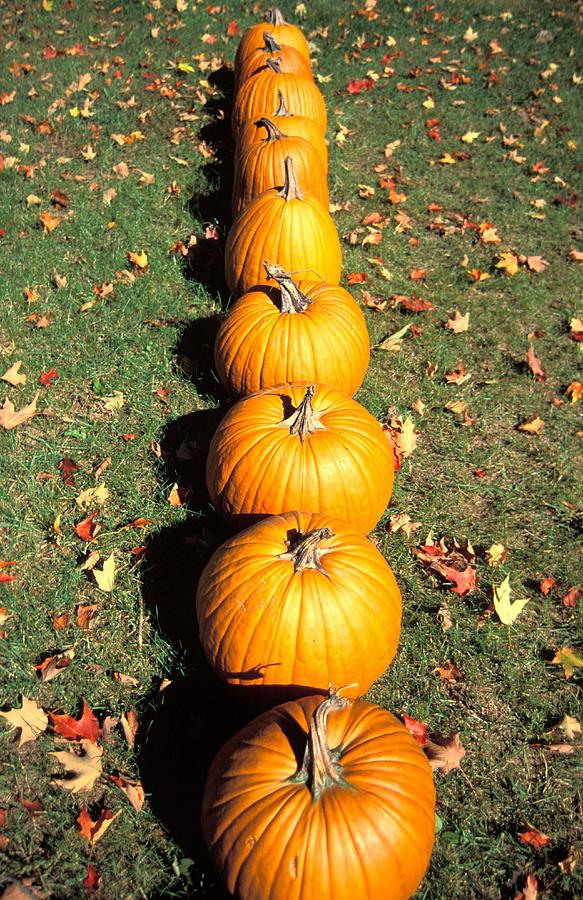 Decor Photograph - Pumpkins In A Row by Anonymous