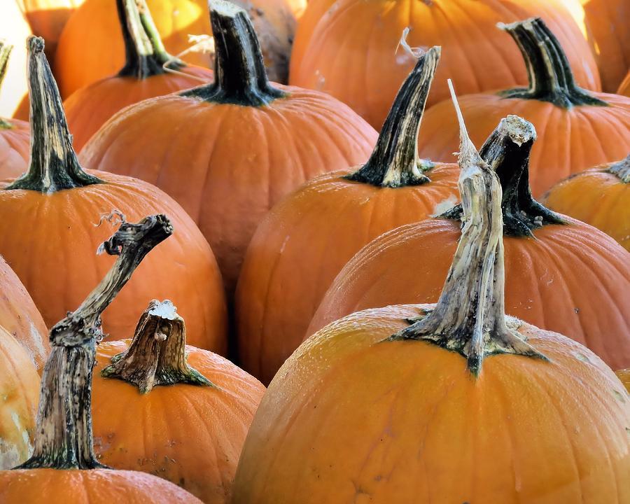 Pumpkins Photograph - Pumpkins by Janice Drew