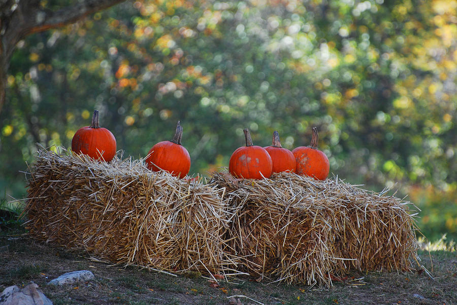 Fall Photograph - Pumpkins by Lorena Mahoney