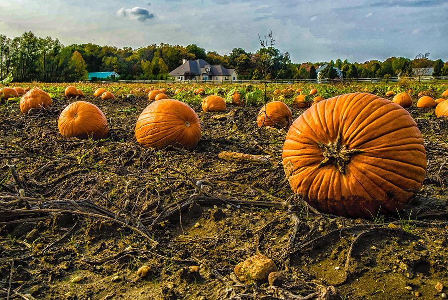 Fall Photograph - Pumpkins Picking by Louis Dallara