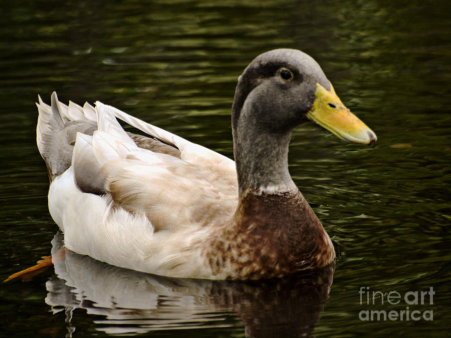 Punaluu Beach Duck by Patricia Griffin Brett