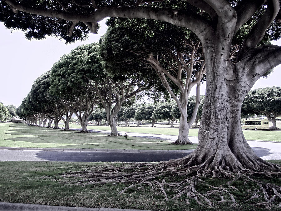 Punchbowl Photograph - Punchbowl Cemetery - Hawaii by Daniel Hagerman
