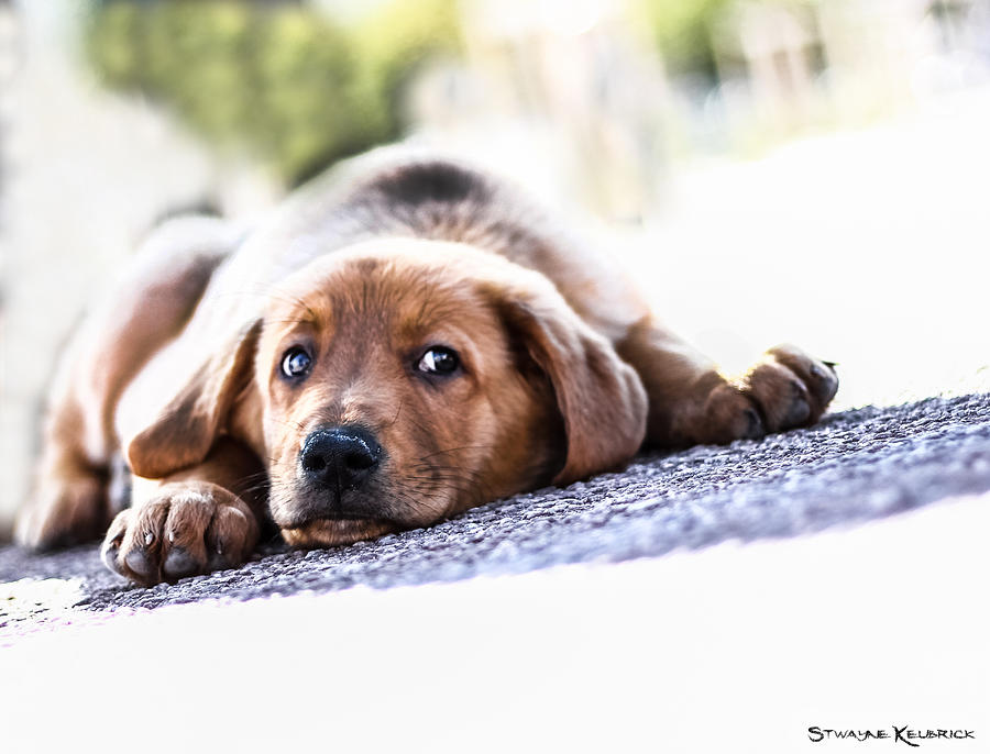 Coronavirus Photograph - Puppet dog by Stwayne Keubrick