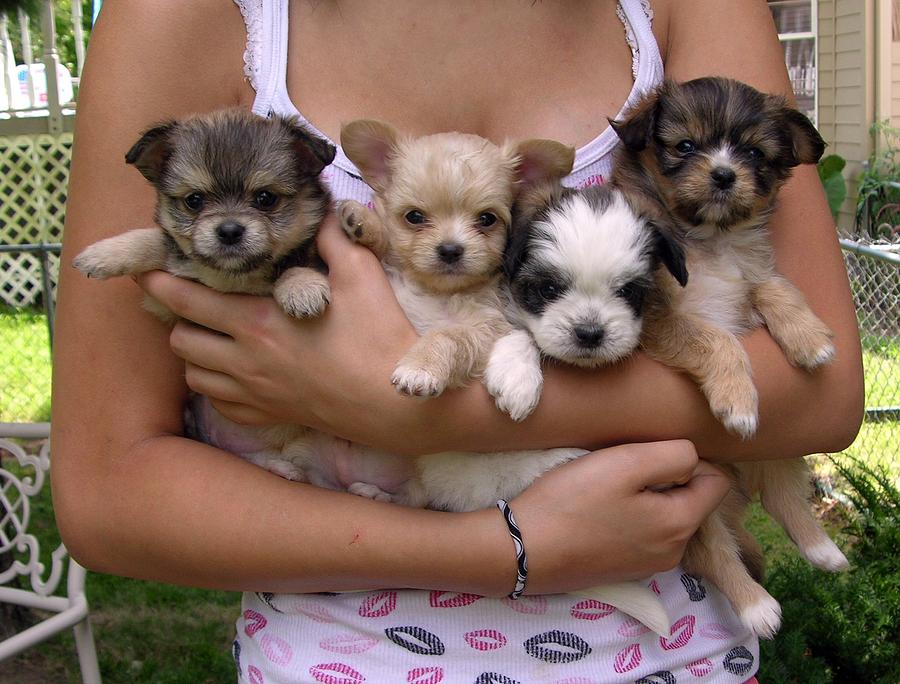 Puppies Photograph - Puppies In Marias Arms by John Lautermilch