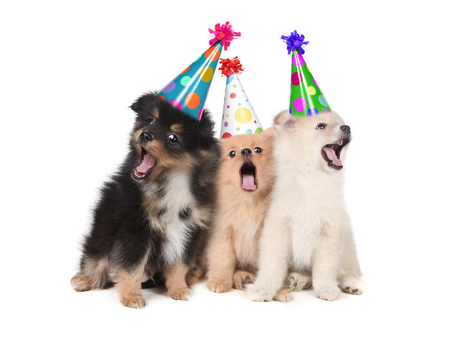 Puppies Singing Happy Birthday Wearing Party Hats Photograph By