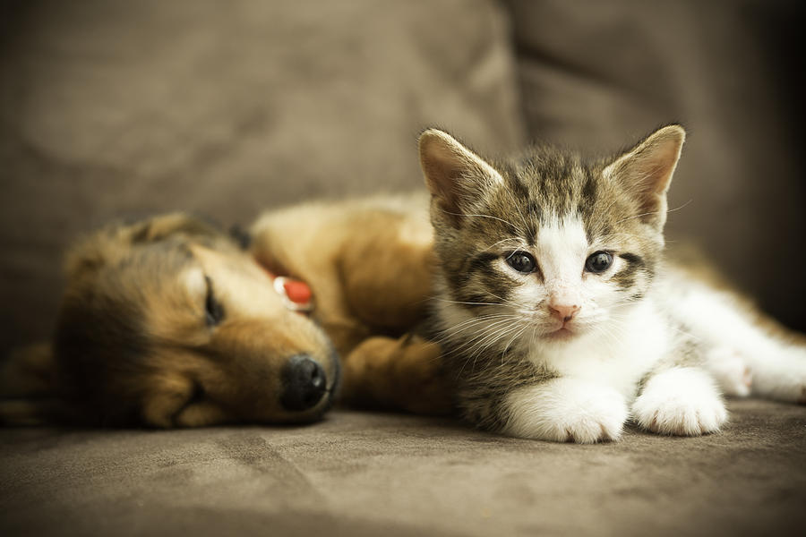 Puppy and Kitten Photograph by Djgunner
