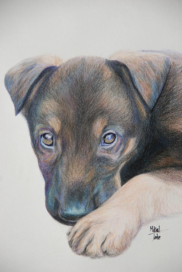 puppy dog eyes drawing by mikail tate