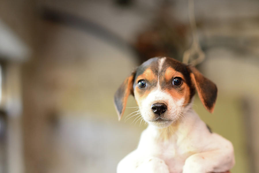Puppy Eyes Photograph by Electravk