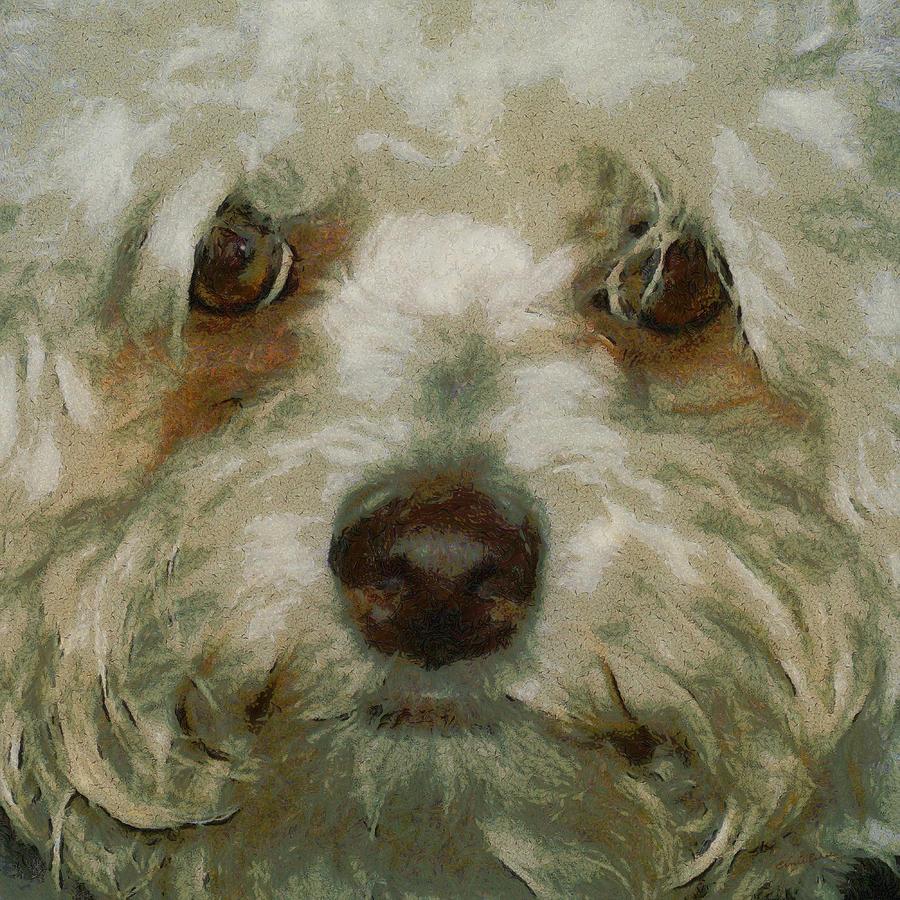Cockapoo Digital Art - Puppy Eyes by Ernie Echols