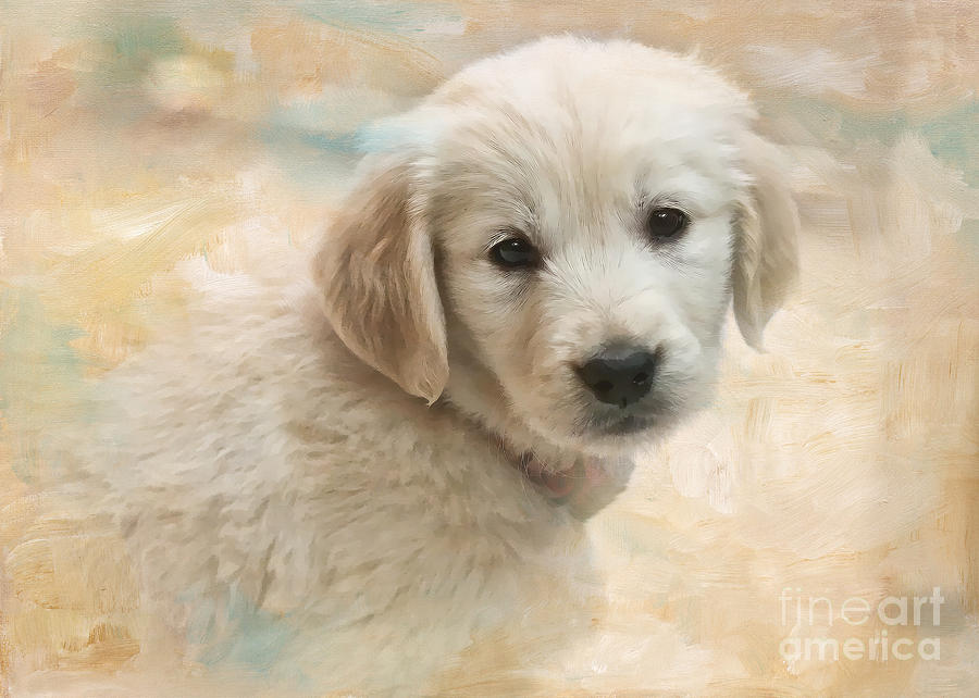 Puppy Photograph - Puppy Eyes by Jayne Carney