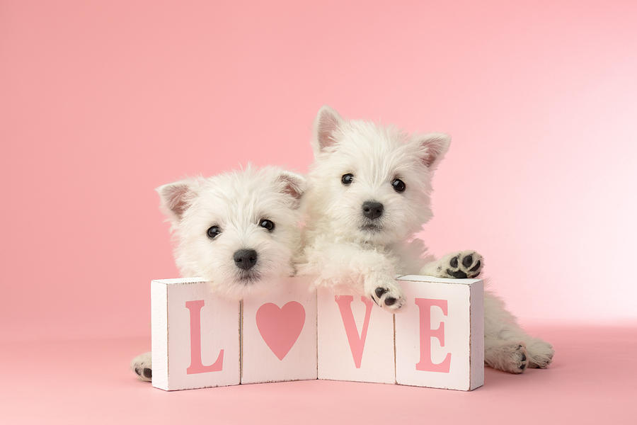 White Photograph - Puppy Love by Greg Cuddiford
