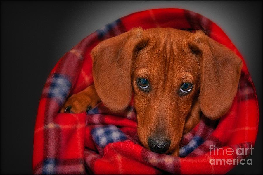 Puppy Photograph - Puppy Love by Susan Candelario