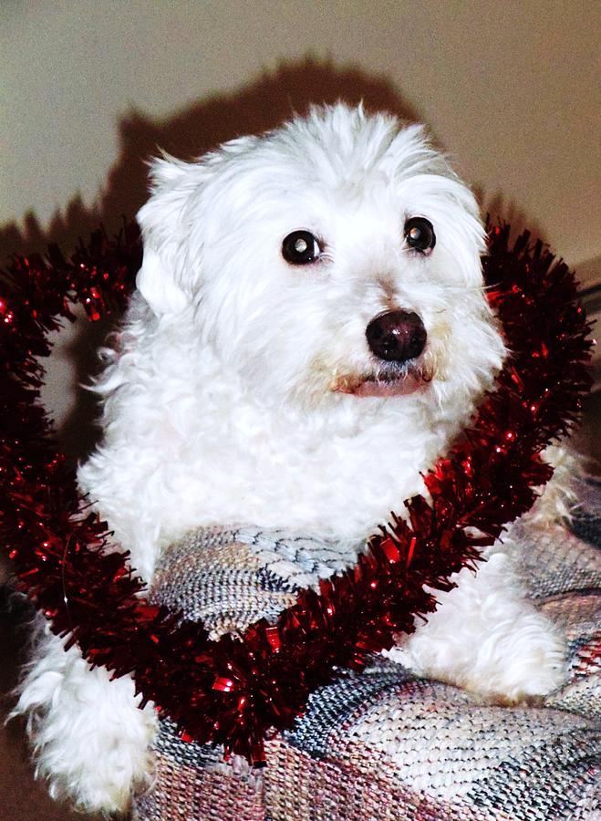 Dog Photograph - Puppy Love Valentine by Eddie Eastwood