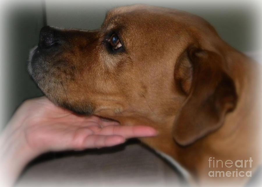 Bulldog Photograph - Puppy Loyalty by Sandra Clark