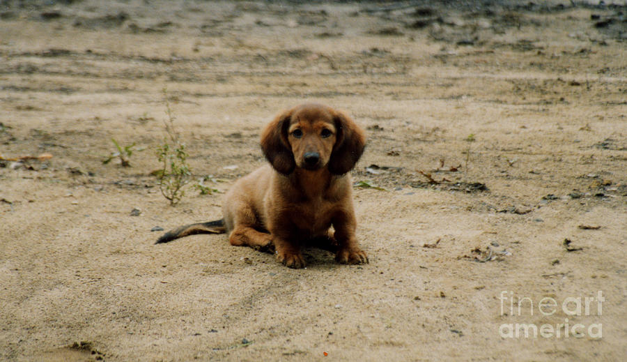 Puppy Photograph - Puppy On The Beach by Nancie Johnson