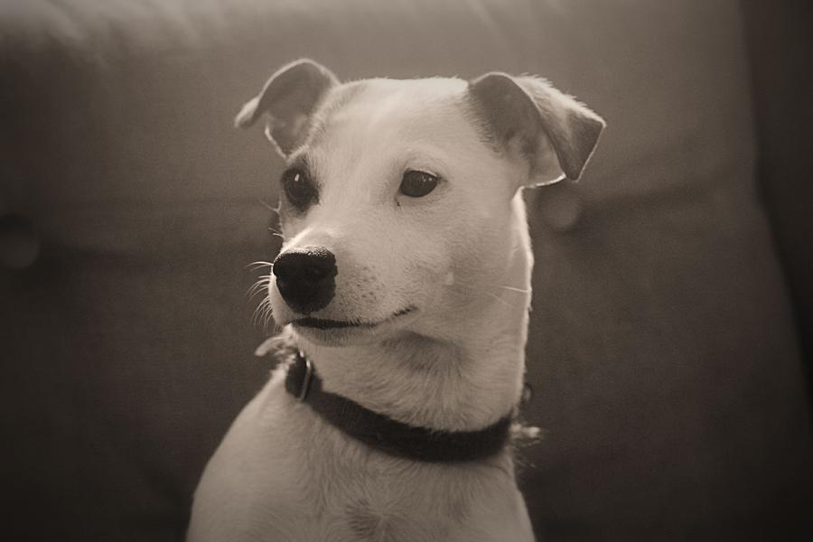 Dog Photograph - Puppy Portrait by Carolyn Ricks